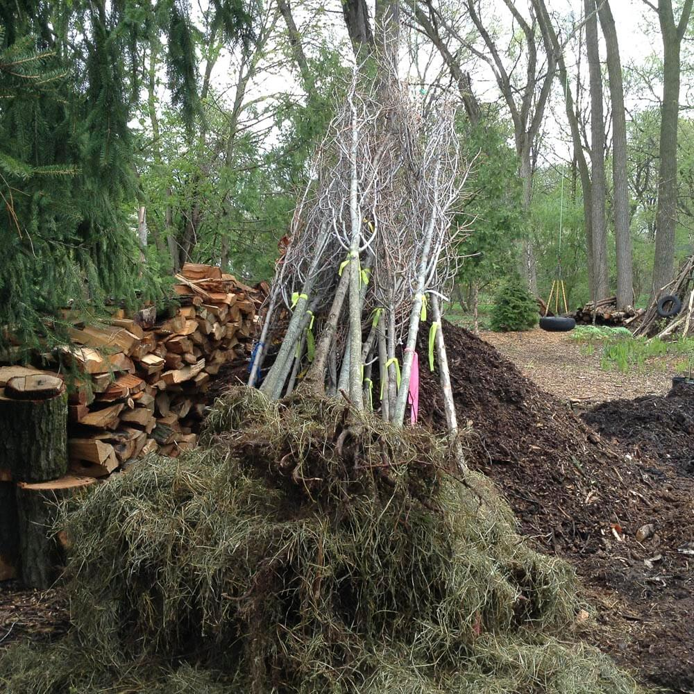 25 Bare Root Plantings
