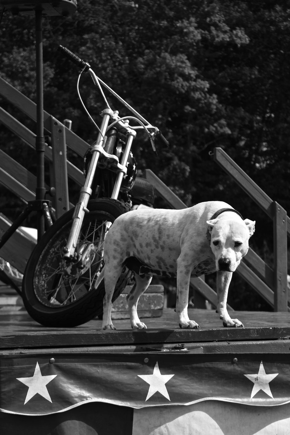 Wall of Death dog, Barber Festival, Birmingham, AL.
