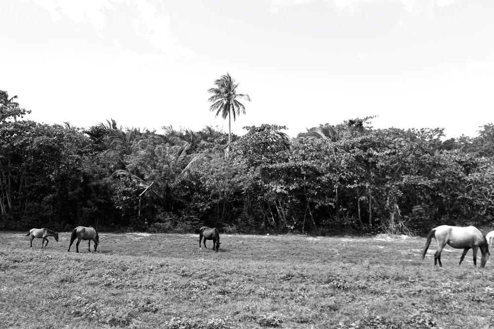 Vieques, Puerto Rico.