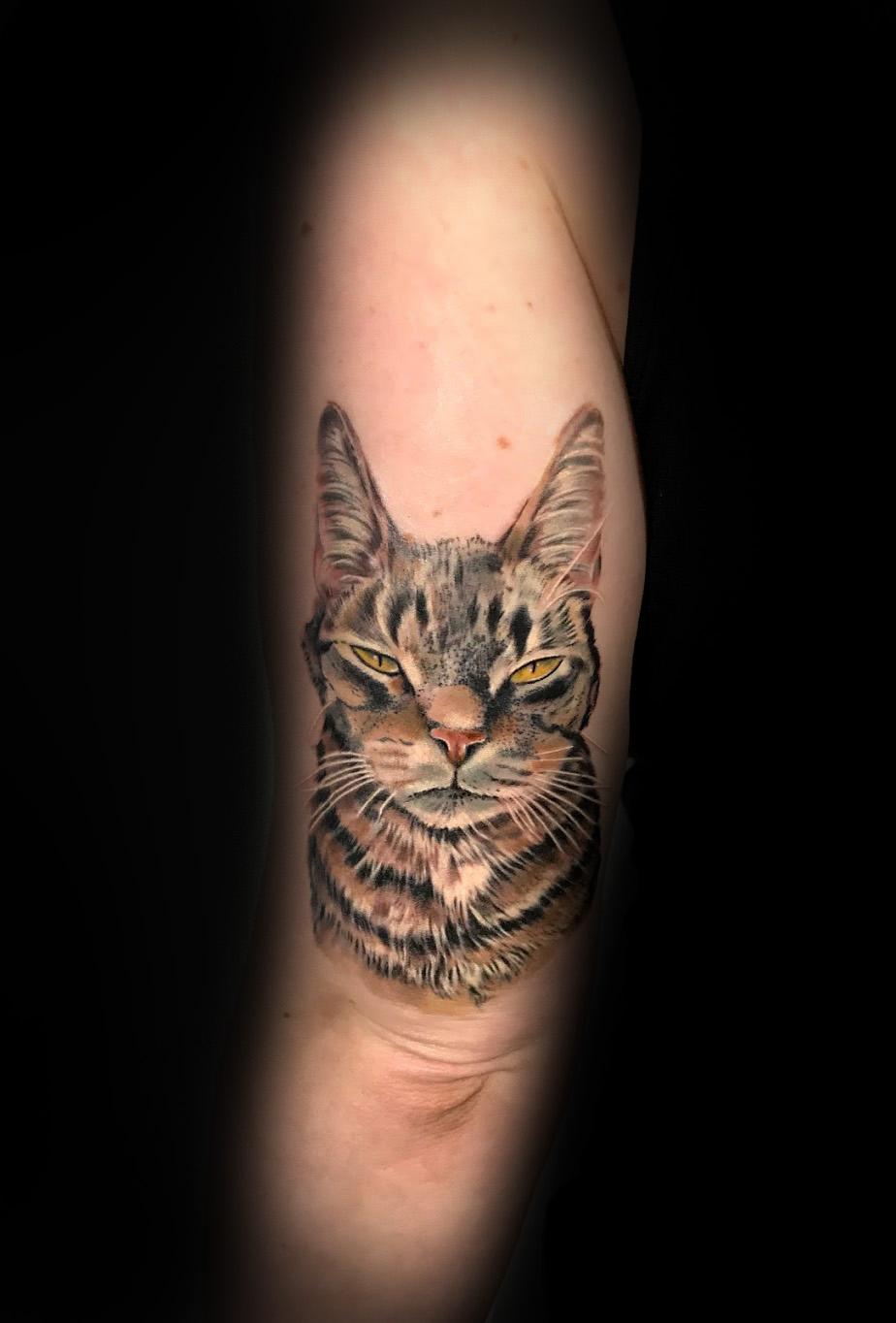 kittytube.jpg