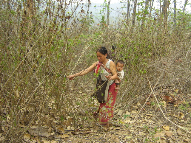 Everyone gets involved. A mother helping to clear the undergrowth for the pipeline