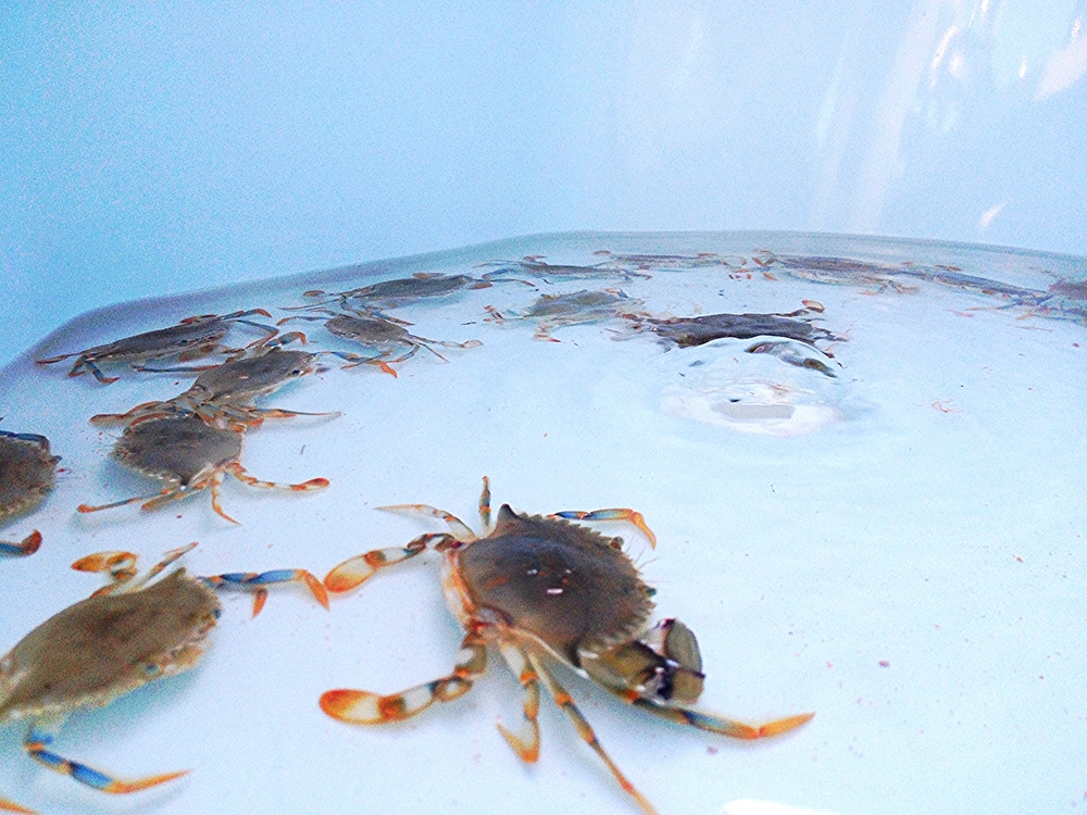 Crabs don't need much water, but it's still important to check on them every once in awhile and make sure they're alive