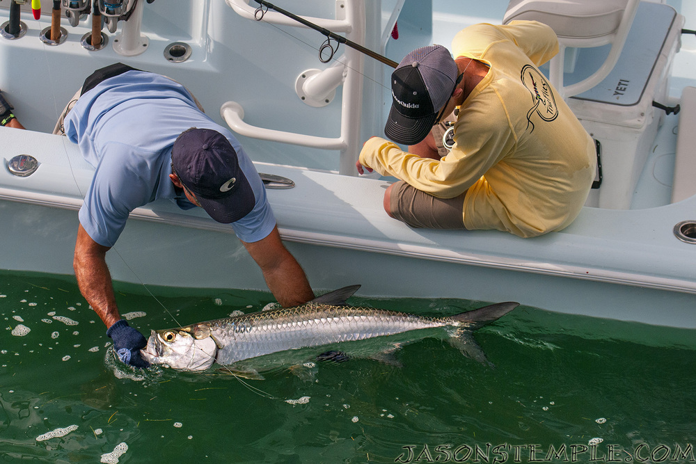 Riley's first tarpon boatside before release. nikon d300s, 85mm, f/5.0, 1/2500 sec