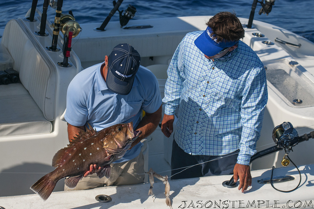 Checking out another first: a snowy grouper. nikon d300s, 110mm, f/5.6, 1/1600 sec