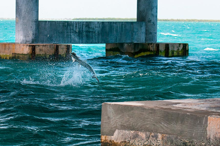 after adjusting the rig with local knowledge, rich hooks up and his tarpon heads for the goalposts. nikon d300s, 100mm, f/5.0, 1/640 sec