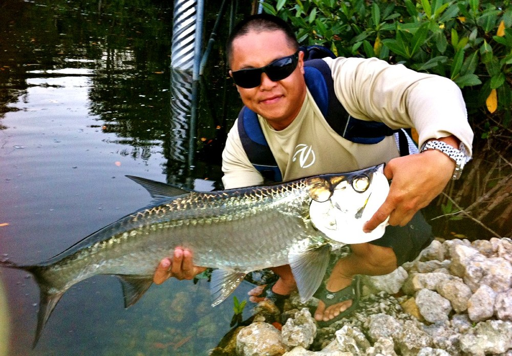 Baby tarpon in canals saltwater experience fishing blog for Florida canal fishing