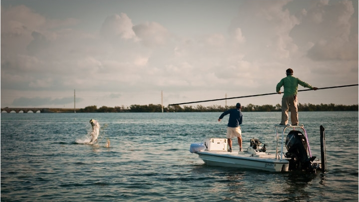 Tarpon require a much heavier rod than bonefish and permit