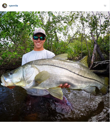 Huge-snook-wading