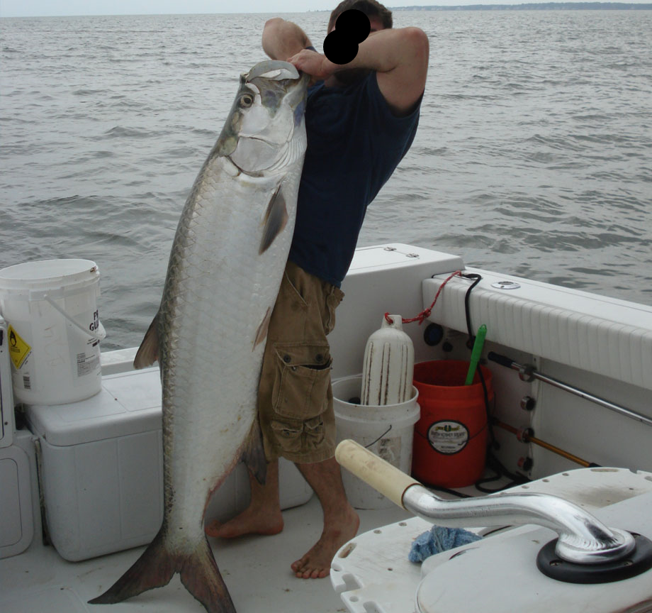 With new regulations, pictures like this of a tarpon out of the water may be a thing of the past.