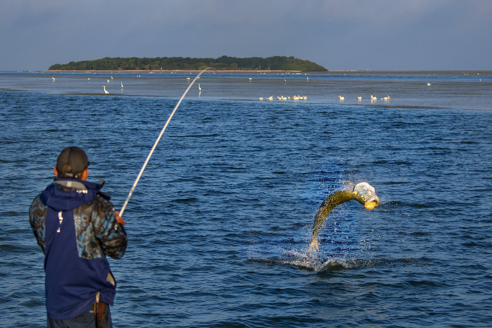 Saltwater Experience Sandy Key Monsters Giant Tarpon