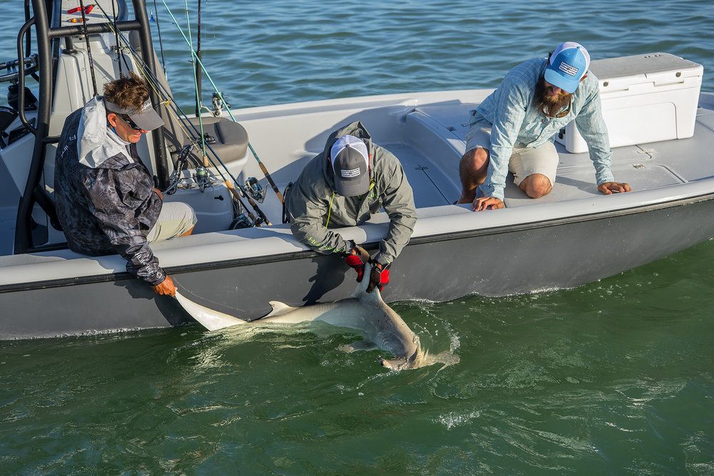 daniel-andrews-of-captains-for-clean-water-catches-a-shark-on-saltwater-experience-in-florida-keys