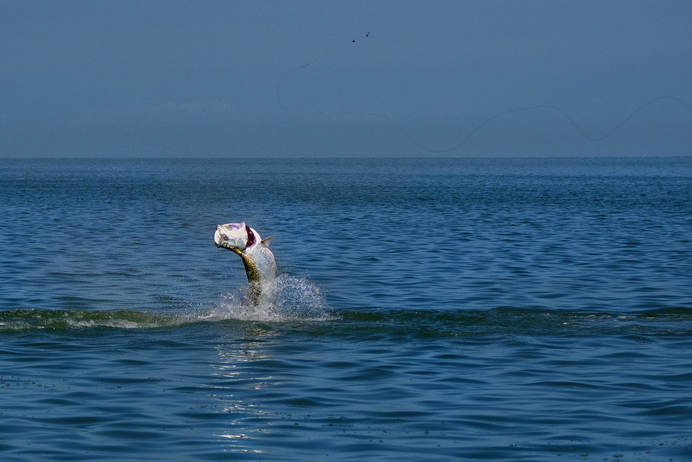 giant-tarpon-in-the-florida-keys-caught-on-saltwater-experience-fishing-show
