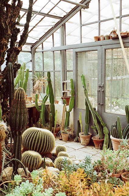 room-505 :      cactus greenhouse  by  whimsical jane  on Flickr.