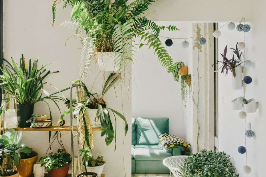 bohemianhomes :     Houseplants and pompoms