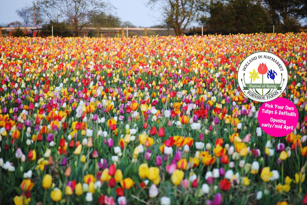 facebook_cover_spring.jpg