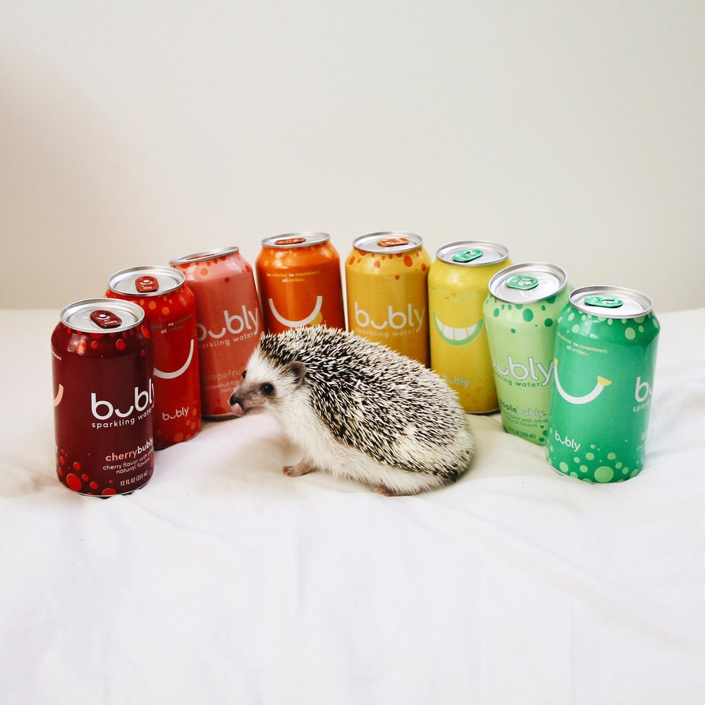 Atticus the Hedgehog   @atticusthehedgie  for Bubly sparkling water