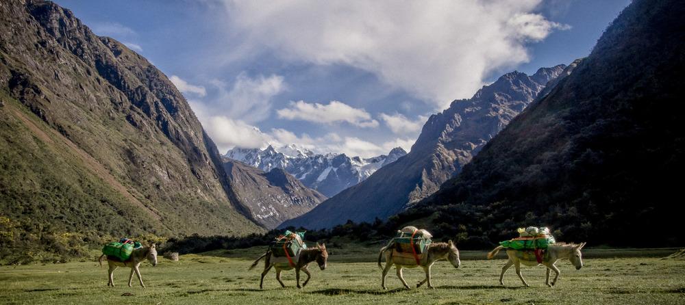 peru donkeys (1 of 1).jpg