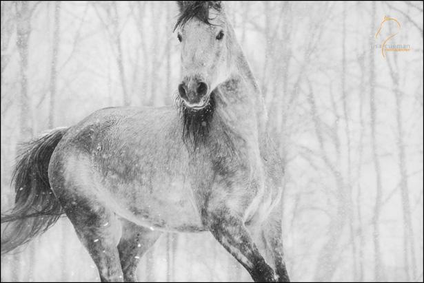 Lisa-Cueman-Snow-Horse