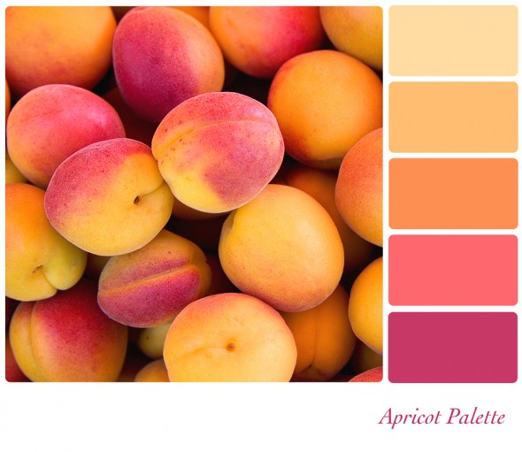 bigstock-Apricot-background-colour-pale-365958371-590x511