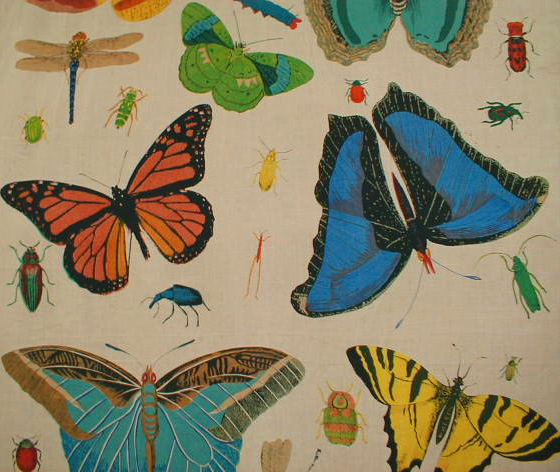 design-legacy-butterfly-multi-560x472