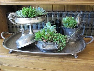 Succulents in Silver!