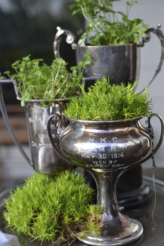 Vintage trophies planted with moss.