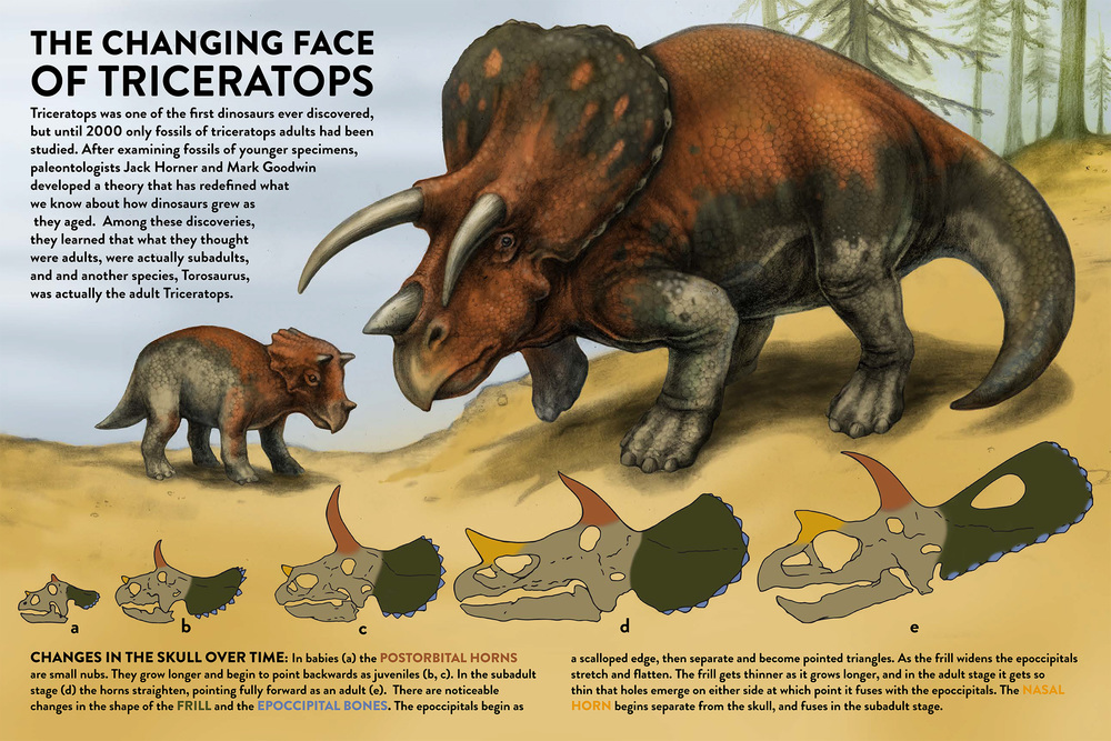The Changing Face of Triceratops