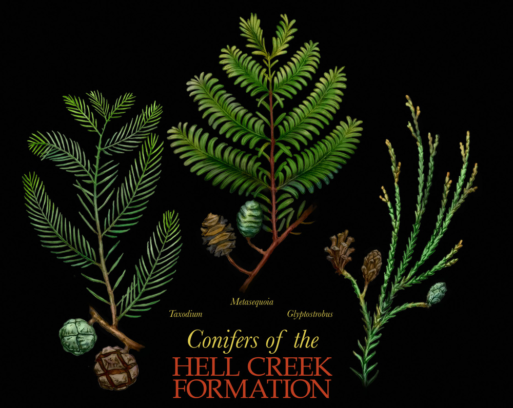 Conifers of Hell Creek