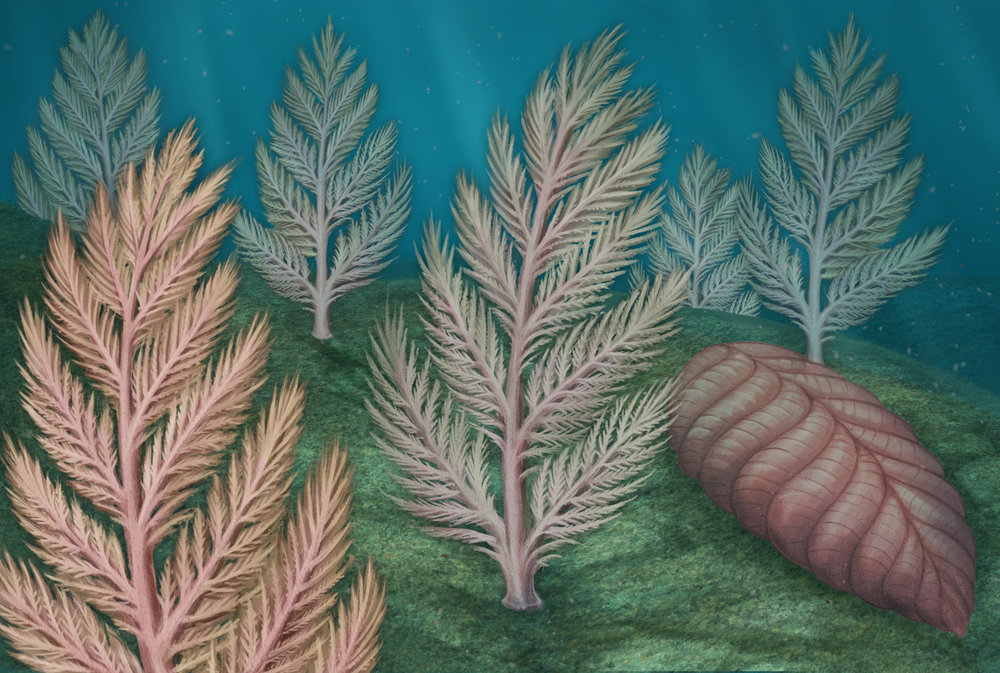 """Exploring the Mysterious Life of One of Earth's First Giant Organisms"" for Scientific American"