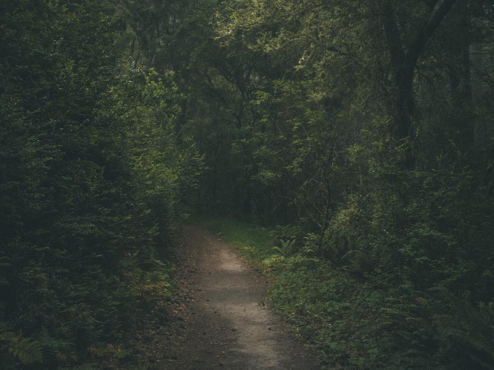 Woods-1801.jpg