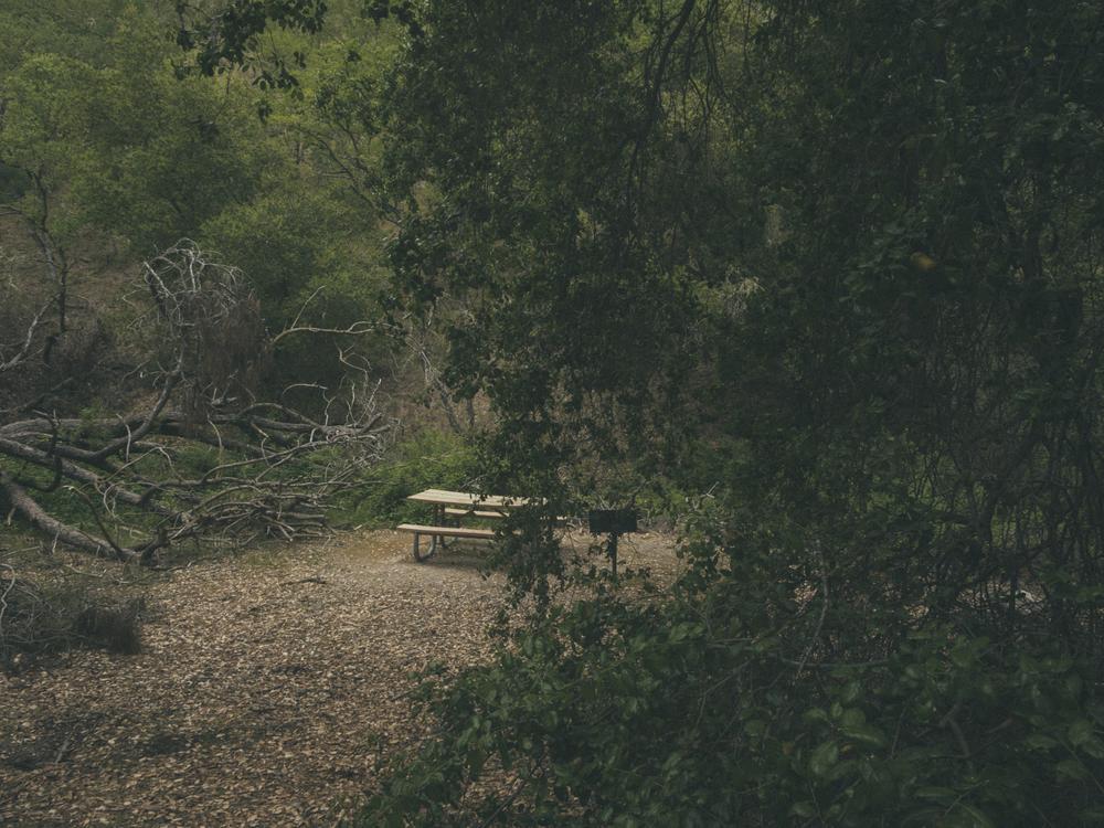 Woods-2254.jpg