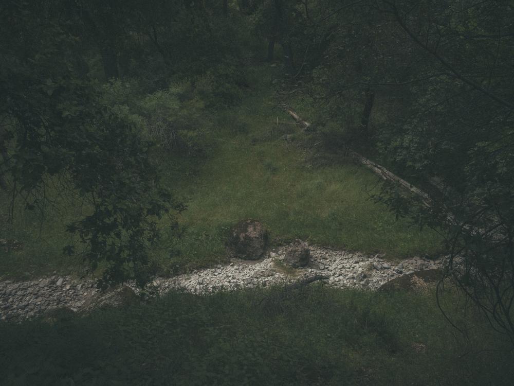 Woods-2268.jpg