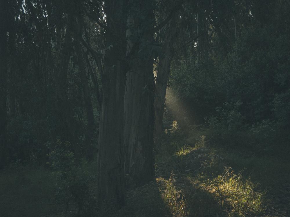 Woods-7838.jpg