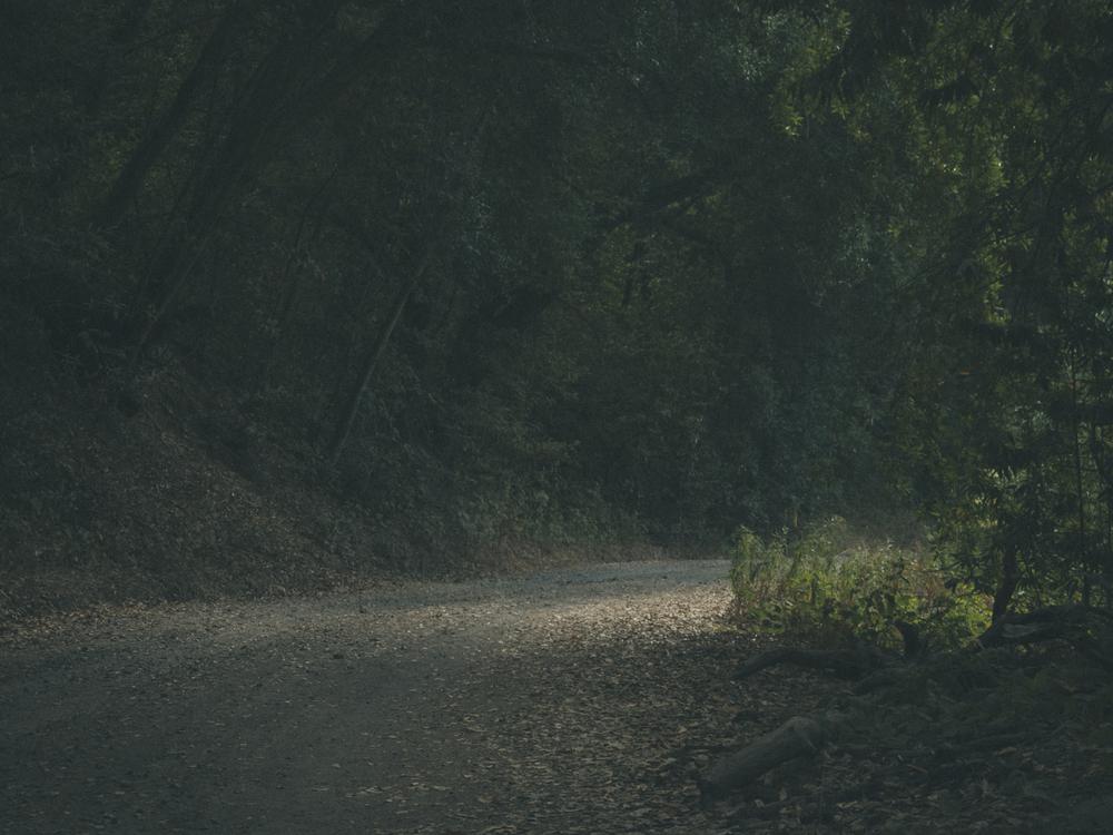 Woods-9116.jpg