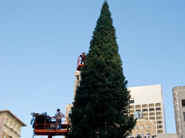 Christmas Tree at Union Square. San Francisco, CA  / ©Stella Kalaw