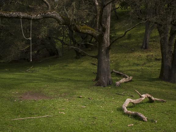 Buckeye Ranch Trail. Briones Regional Park. Lafayette, CA/ ©Stella Kalaw