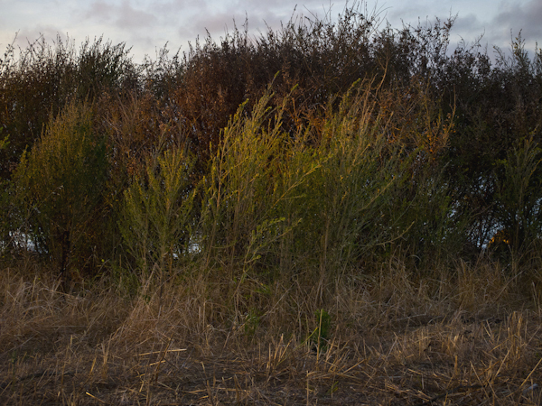 Landscape study  / ©Stella Kalaw