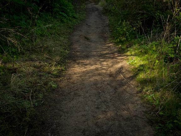 Curran Trail. Tilden Park, Berkeley./ ©Stella Kalaw