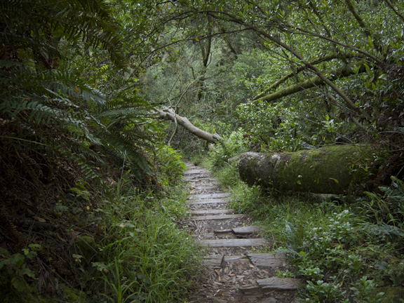 Steep Ravine Trail, Mt. Tamalpais/ ©Stella Kalaw
