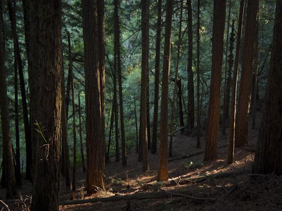 Steep Ravine Trail. Mt. Tamalpais/ ©Stella Kalaw