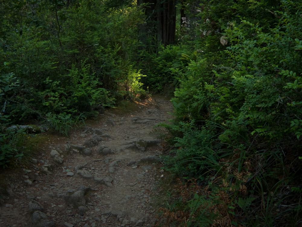 Dipsea Trail. Muir Woods, CA./ ©Stella Kalaw