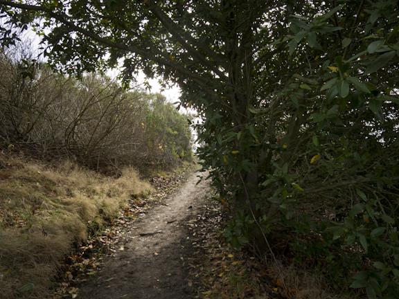 Wildcat Peak Trail. Tilden Regional Park. Berkeley, CA/ ©Stella Kalaw
