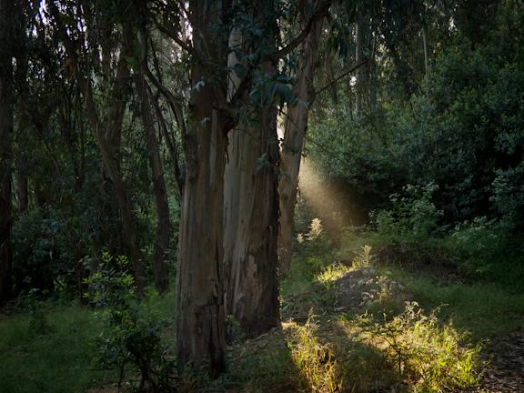 Jewel Lake Trail at Tilden Regional Park. Berkeley, CA./ ©Stella Kalaw