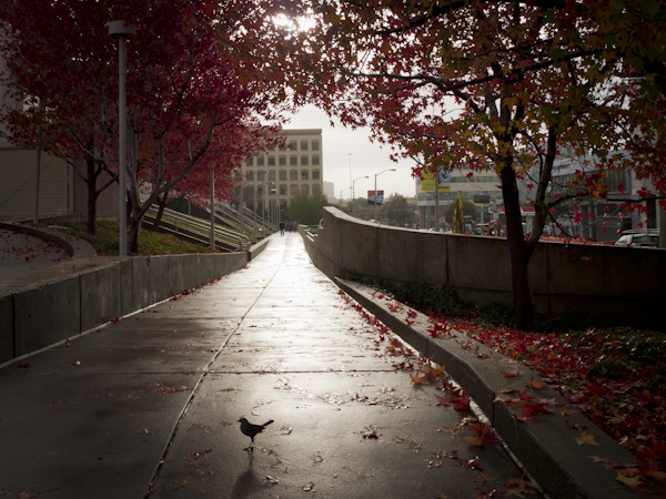 Walkway at Yerba Buena Garden in Winter. San Francisco, CA/ ©Stella Kalaw