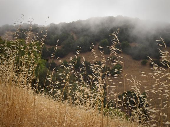 Mt. Burdell Open Space Preserve. Novato, CA/ ©Stella Kalaw