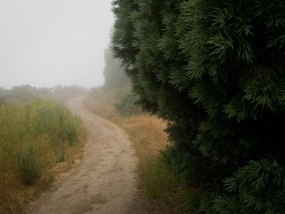 Wildcat Peak Trail. Tilden Park. Berkeley, CA/ ©Stella Kalaw