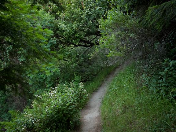 Matt Davis Trail. Stinson Beach, CA/ ©Stella Kalaw