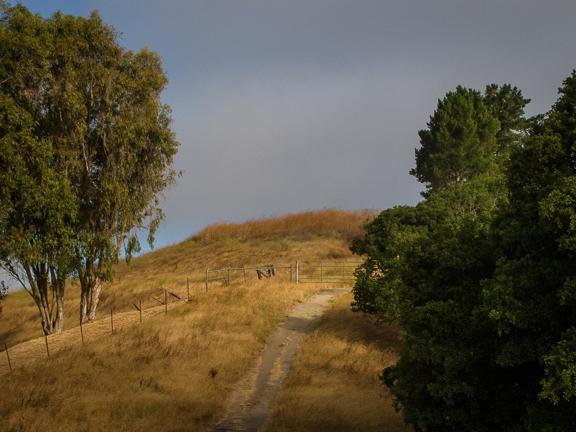 Lafayette Ridge Trail. Lafayette, CA./ ©Stella Kalaw
