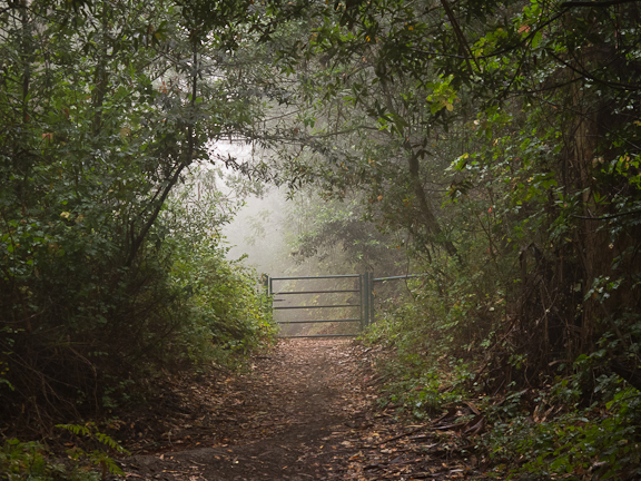 Havey Canyon Trail. Wildcat Canyon Regional Park./ ©Stella Kalaw