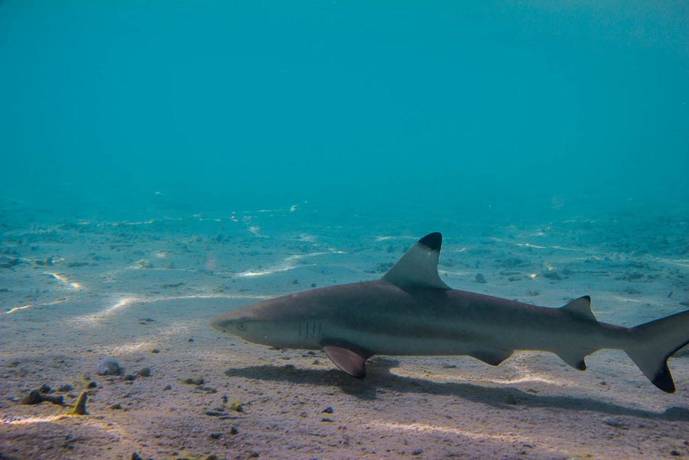 Holiday Island [Dhiffushi] Riff – Malediven